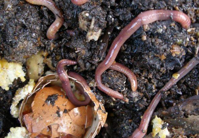 How Eggshells changed my garden